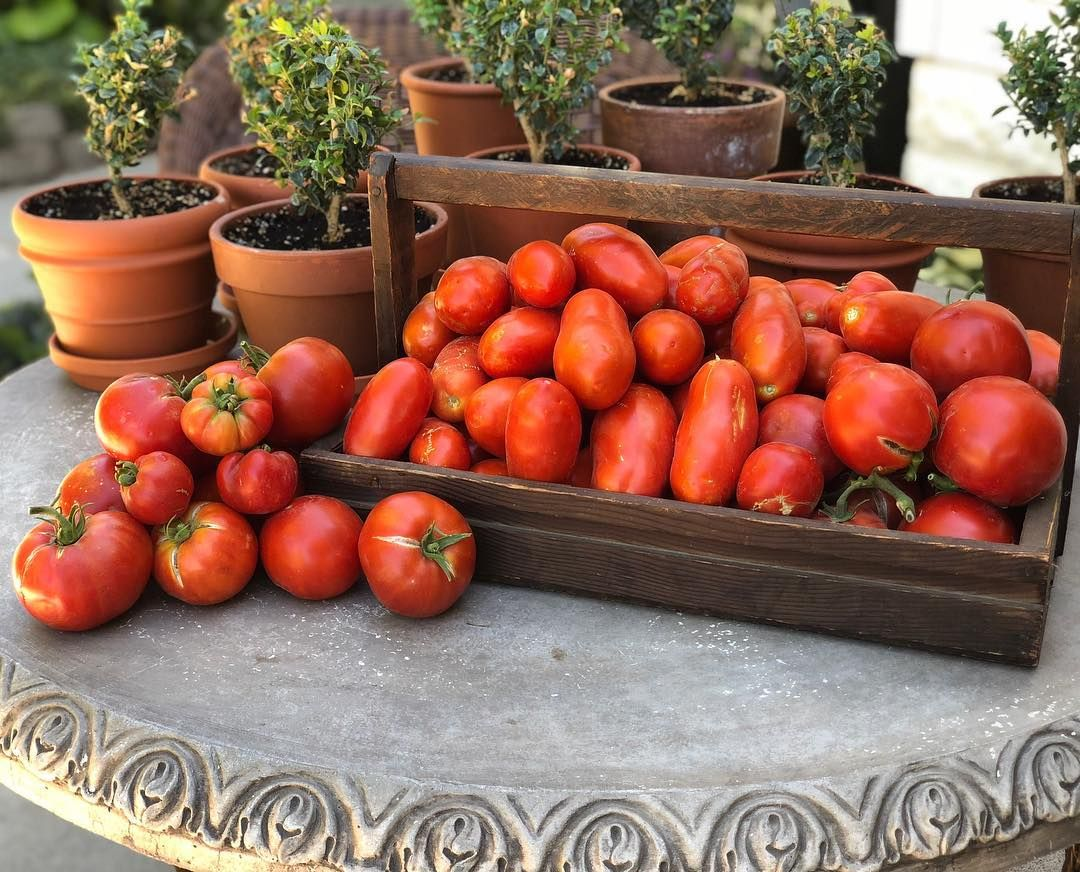 30 Pound Harvest With Images Harvest Tomato Plants