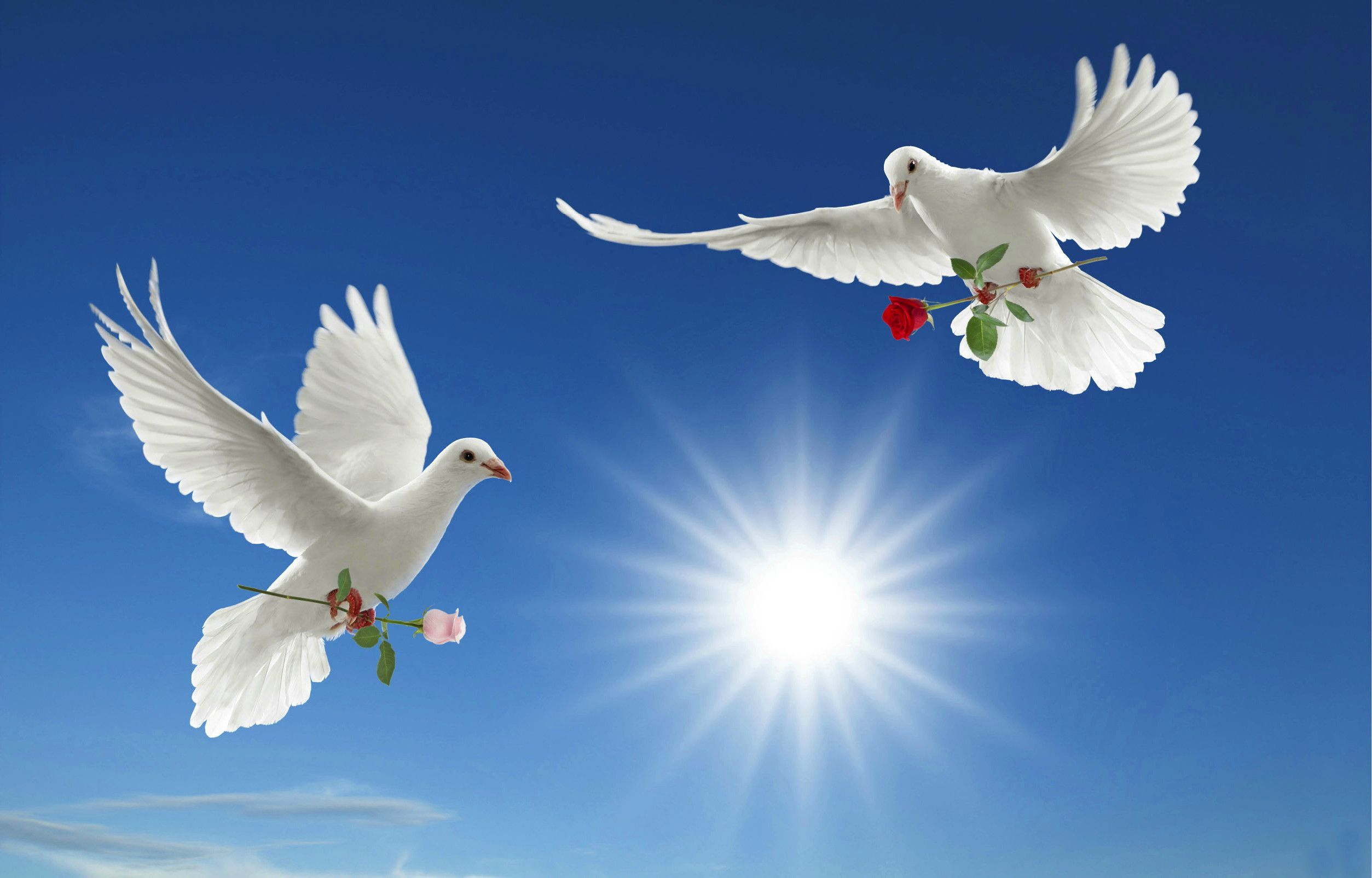 God Is Guiding Us Sri Ramana Maharshi Dove Wallpaper Bird Wallpaper Dove Images