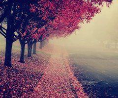 prettyy pathwayy