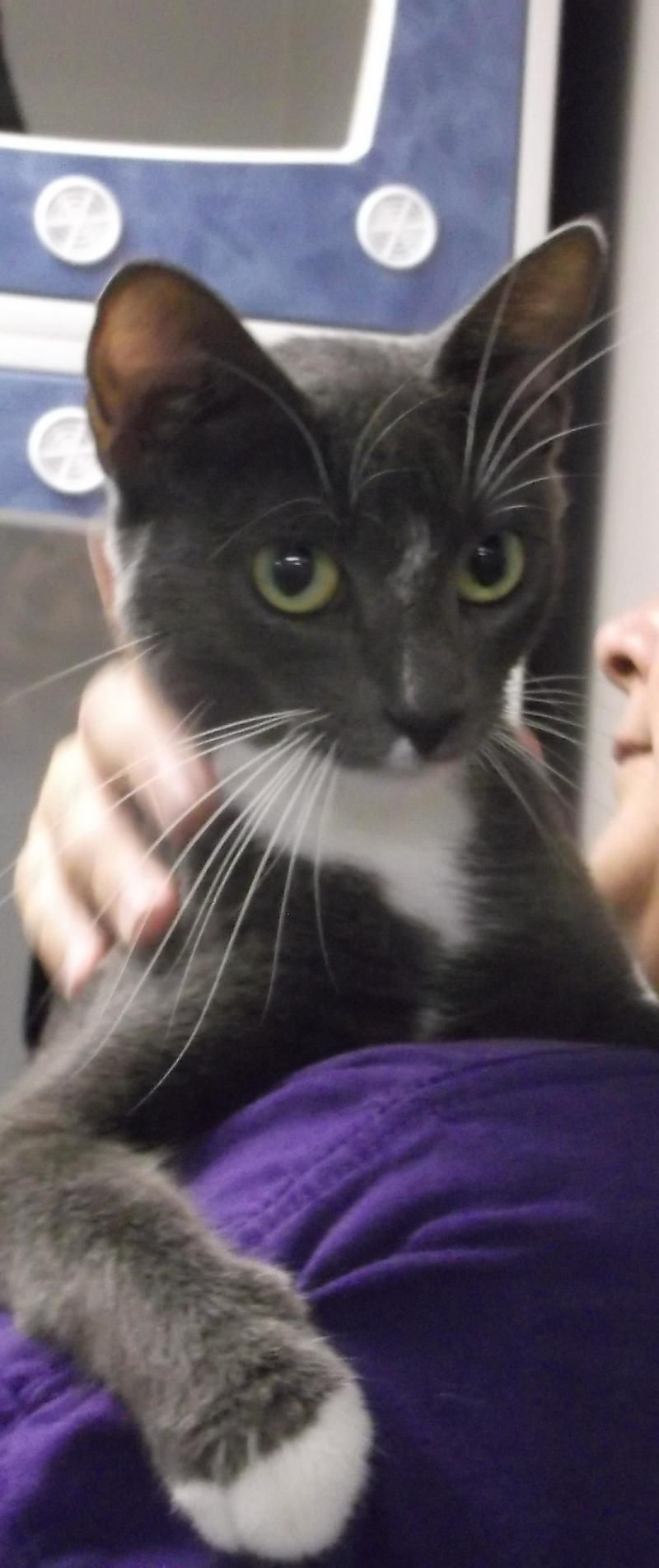 Adopt Adopted 27569 Judy On Petfinder Animals Cat Adoption Cute Animals