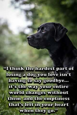 For Sure Dog Quotes Losing A Dog Dogs