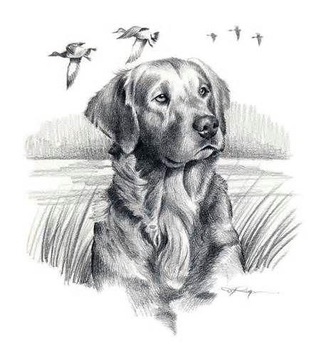 Golden Retriever Dog Art Print Signed By Artist Dj By K9artgallery Dog Print Art Pencil Drawings Of Animals Dog Art