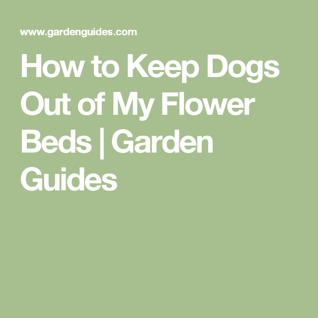 How To Keep Dogs Out Of My Flower Beds | Garden Guides