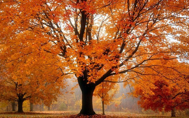 Autumn Wallpaper In Wiinkz Startpage Wiinkz New Tab In Chrome Extension Https Chrome Google Com Websto Fall Facebook Cover Fall Cover Photos Facebook Cover