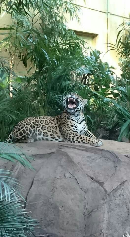 Catching flies at Chester Zoo