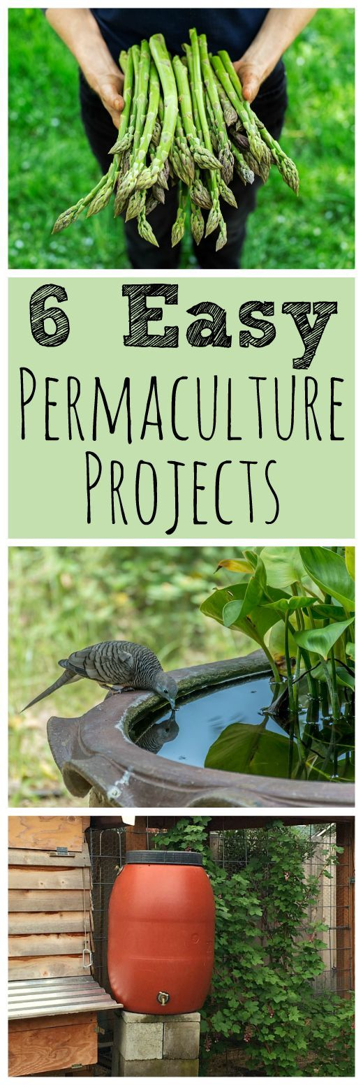 Easy Backyard Landscaping Ideas For Beginners In Square: 6 Easy Backyard Permaculture Projects For Beginners