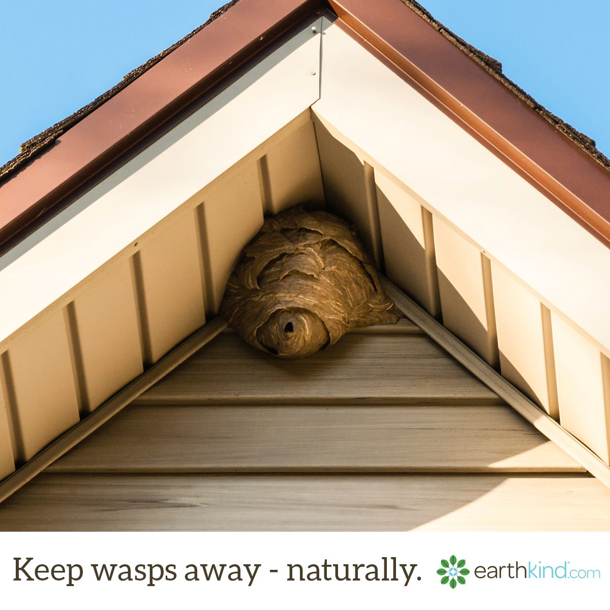 Try this tip to keep wasps away from your home and yard