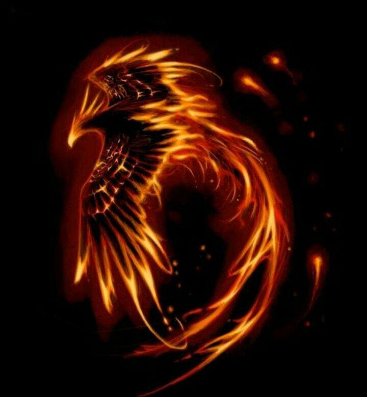 Cool Tattoo Backgrounds: Phoenix Wallpaper, Phoenix