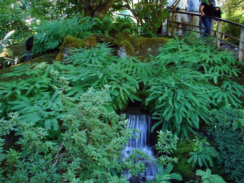 Fern Garden Ideas Fern gardens pictures google search garden pinterest ferns fern gardens pictures google search workwithnaturefo