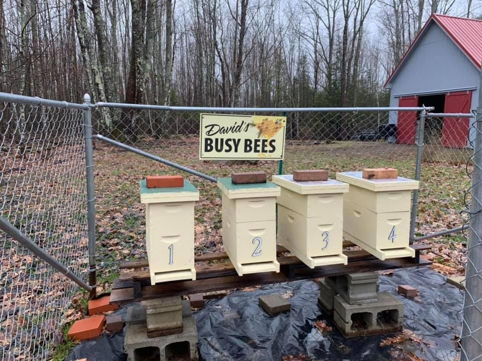 Is it Profitable to be a microbeekeeper? beehives Bee