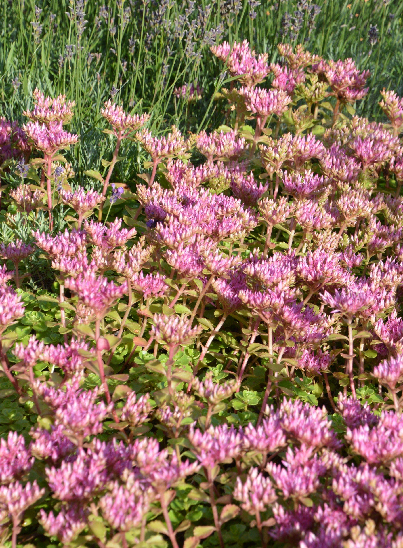 af835b69d608f55fb7373322f5fd5ac6 Luxe De Fleurs De Jardin Des Idées