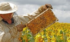 Wear A Bee Suit Open Hives And Taste Honey With Beekeepers Bee