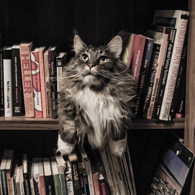 10 Livros apaixonantes para ler nas ferias