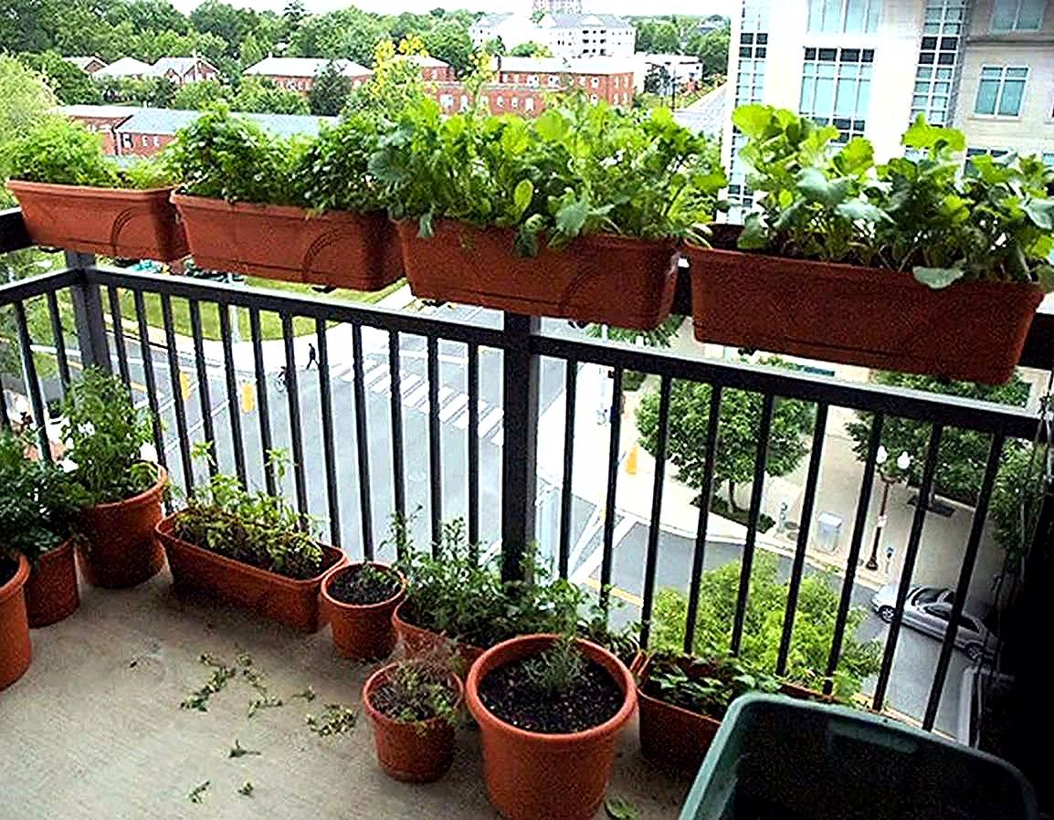 Gardening For Beginners Apartment In 2020 Apartment Garden Small Balcony Garden Home Vegetable Garden Design