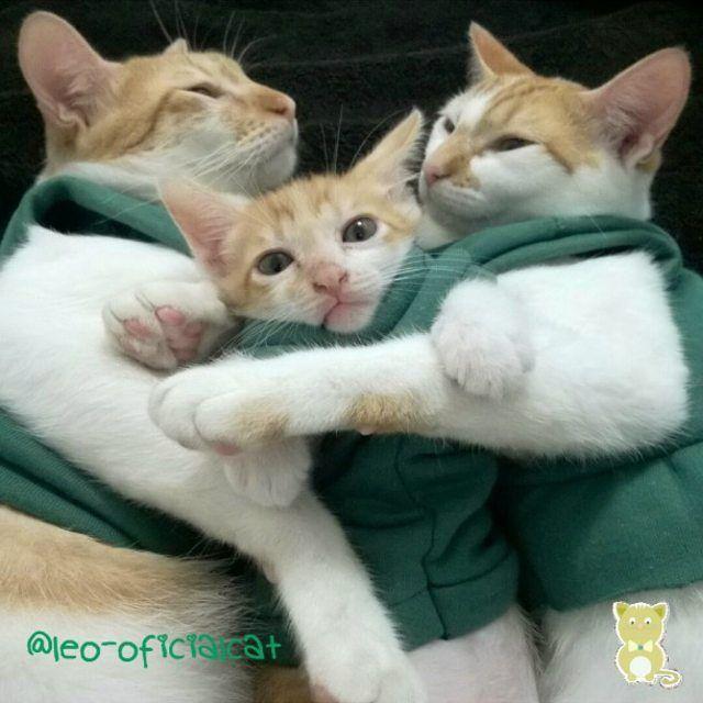 catstocker