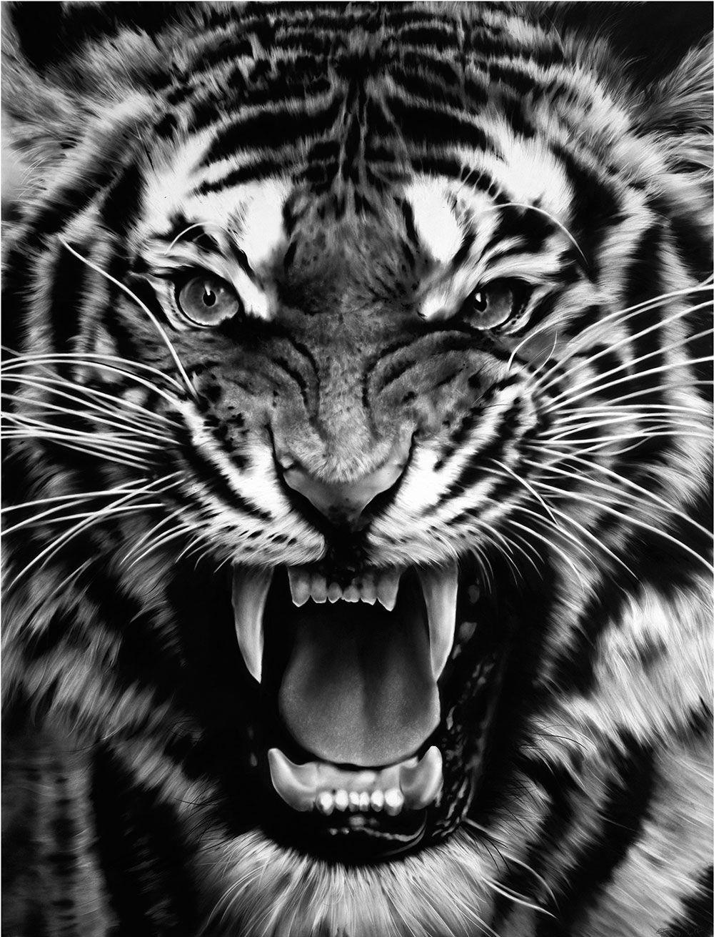 Pin De Adriana Hernandez Em Tattoos Rosto De Tigre Tatuagem De Animais Imagem De Tigre Tiger tattoo design wallpaper