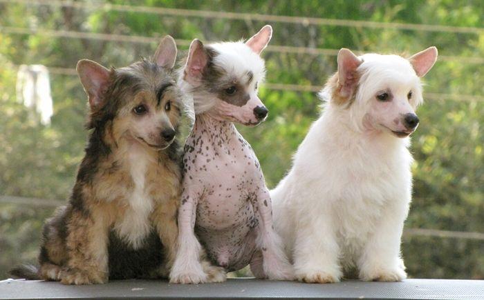Pom Chi This Looks A Lot Like Radar Cute Animals Puppies