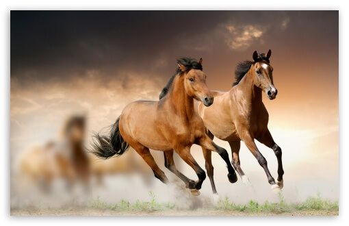 15 Free Wallpapers Sites Of 2020 The Paper Wall Alternatives Horse Wallpaper Horses Running Horses