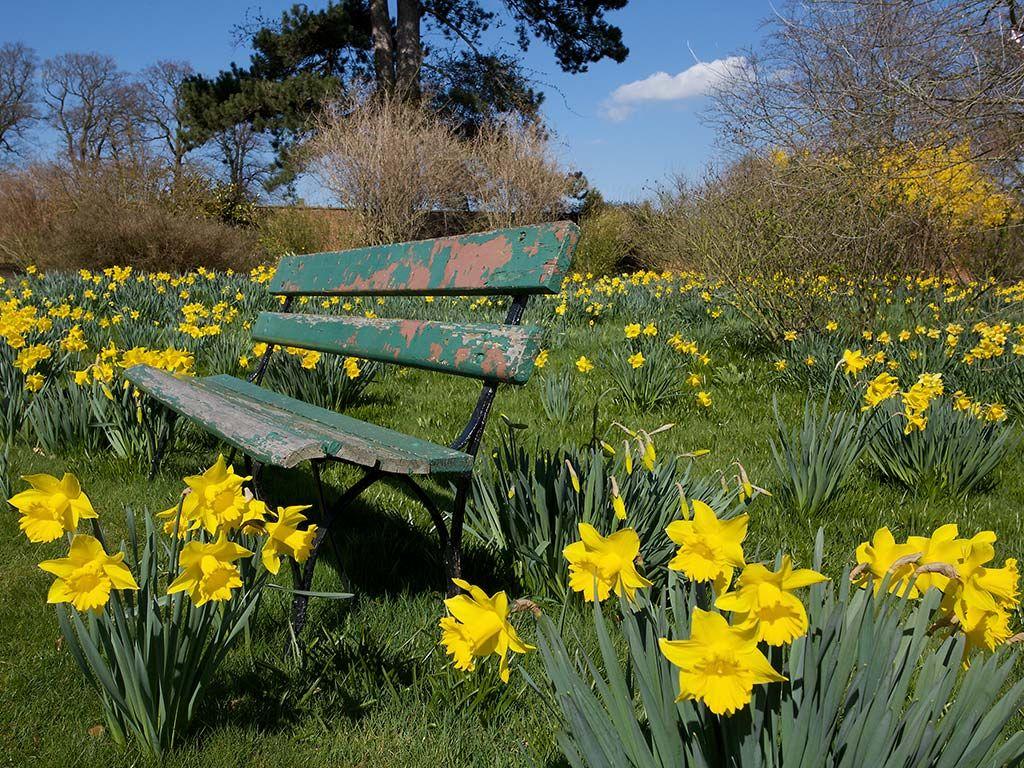 Daffodils And A Garden Seat Desktop Background 1024x768 Pixels Daffodil Gardening Landscape Wallpaper Spring Wallpaper