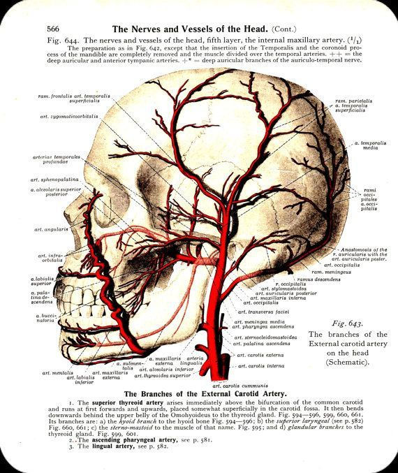Scalp Nerve Anatomy Head Find Lots More Of The Best Vintage Book