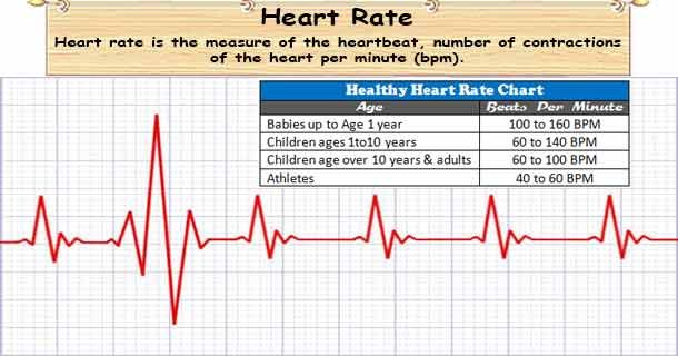 What Is A Heart Rate Or Pulse Rate Number Of Time Heart Beats Per