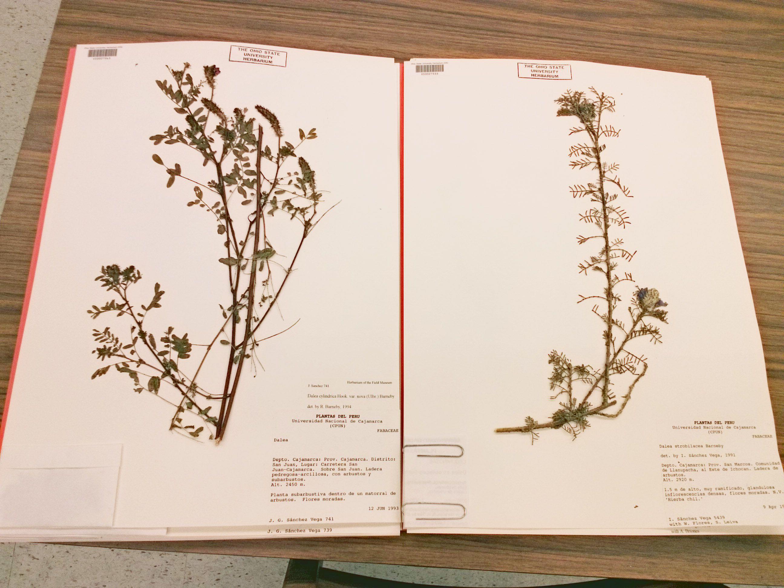 Image Result For Herbarium Images