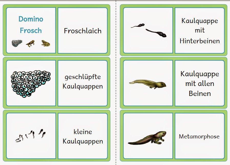 krabbelwiese: Lebenszyklus Frosch | Schulmaterialien | Pinterest ...