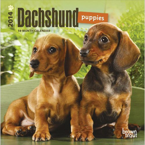 Dachshund Puppies 2014 Mini Wall Calendar Ebay Puppies