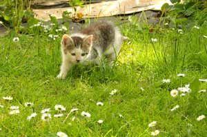 Kitten Playing In The Garden Cat Garden Outdoor Cats Kittens Playing