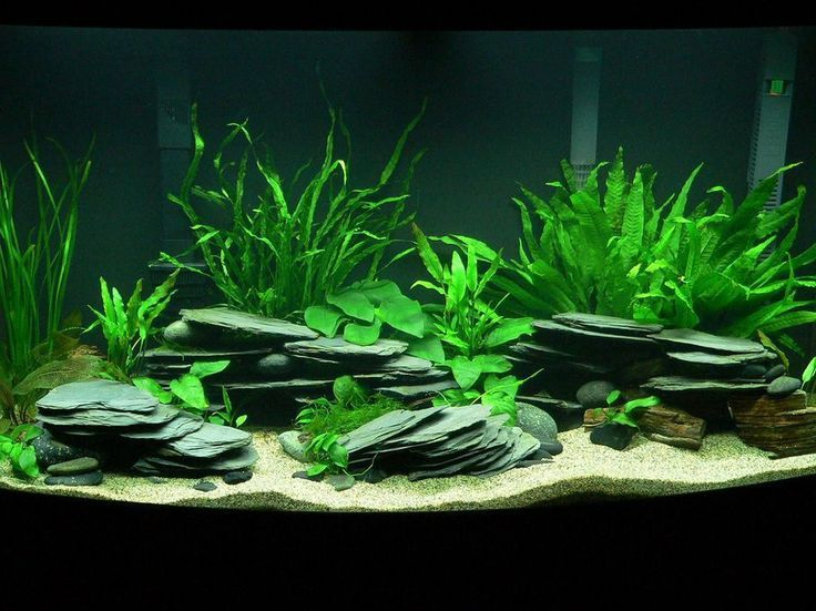 Freshwater Aquarium Design Ideas saltwater or freshwater aquarium design ideas Black River Rock Aquarium Photo Caption Planted Tanganyikan 46 Gallon Bow Tank Description
