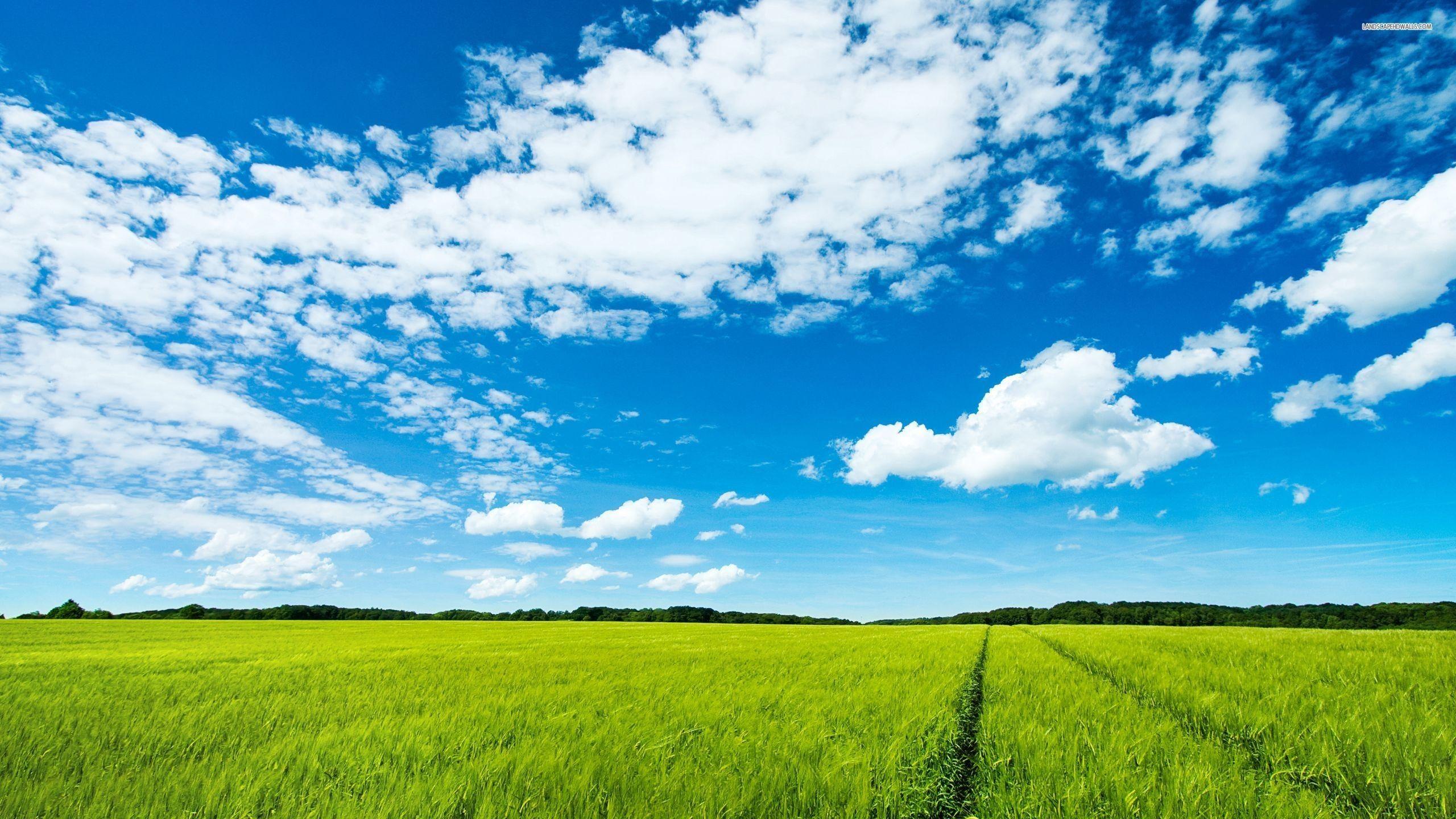 Beautiful Green Field And Blue Sky Hd Wallpaper Summer Landscape