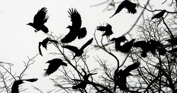 Symbols of the crow  - Aleph
