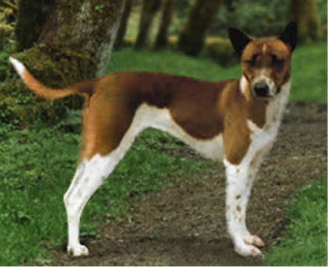 Telomian Breed Unique Dog Breeds Dog Breeds Rare Dogs
