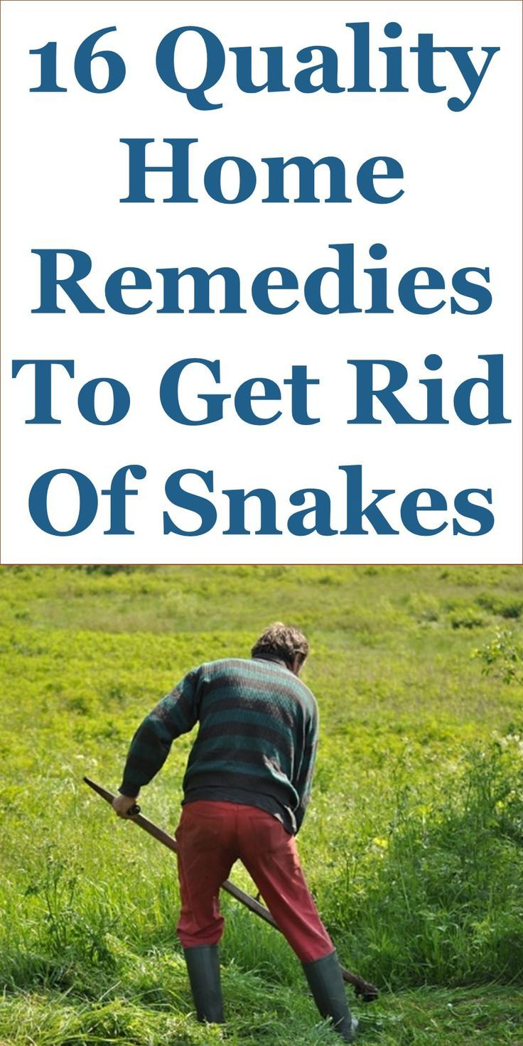 16 quality home remedies to get rid of snakes snake