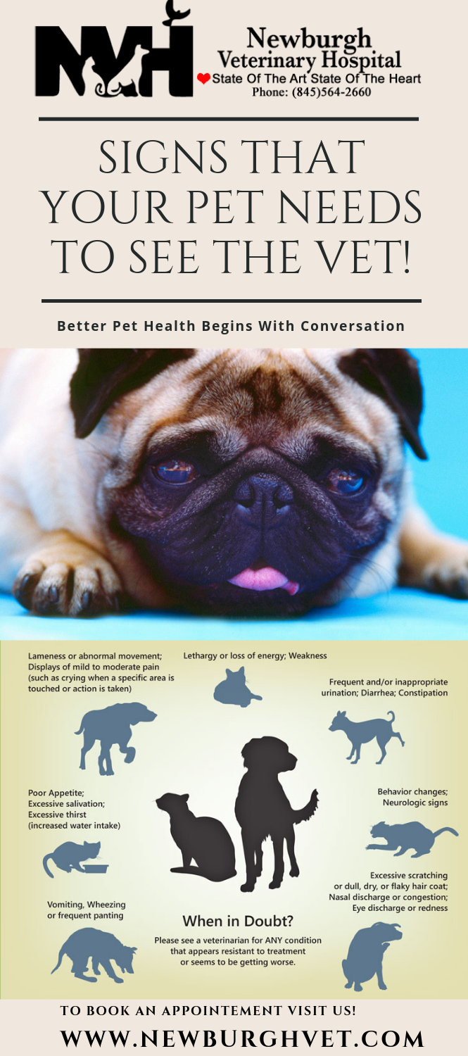 Signs That Your Pet Needs To See The Vet Pet Vet Pet Health Vets