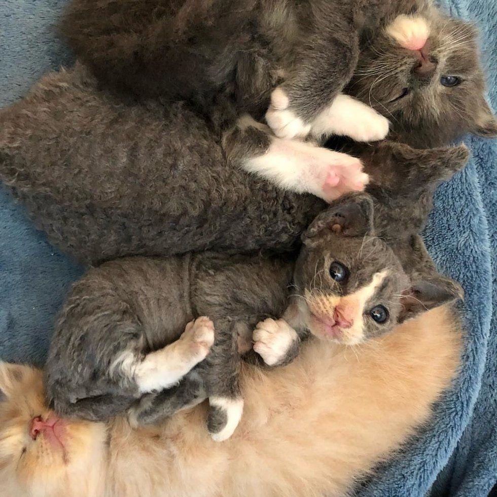 Pin By Nunui Sunshine On Baby Animals Kitten Rescue Kitten White Kittens