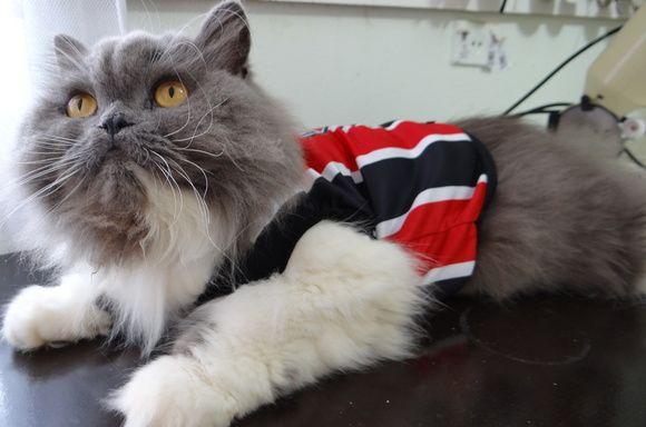 camiseta time são paulo gatos