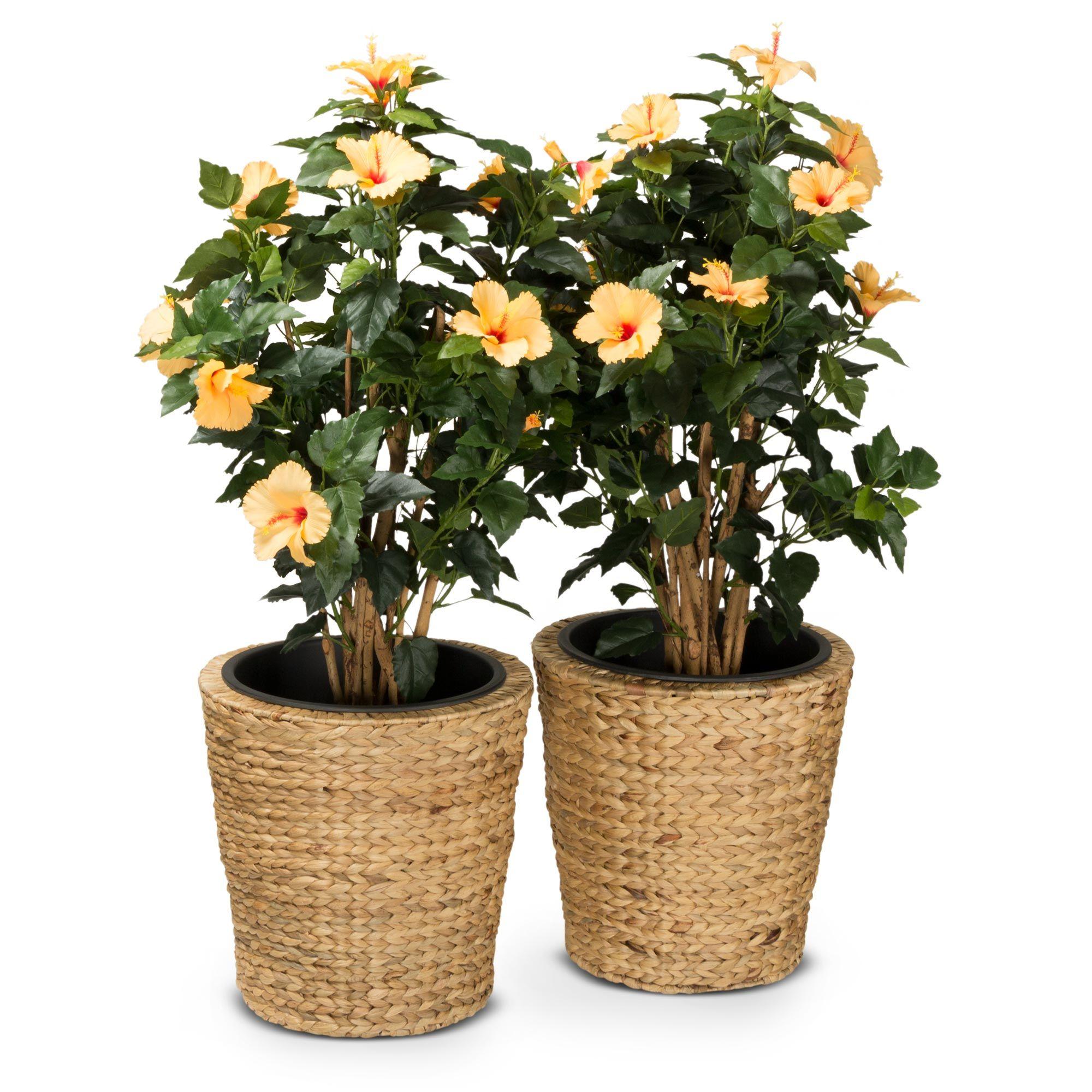2er Set Pflanzkubel Tubo 40 Wasserhyazinthe Pflanzen