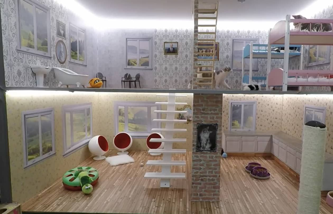 This Livestream Of Kittens In A Dollhouse Is The Best Kind Of