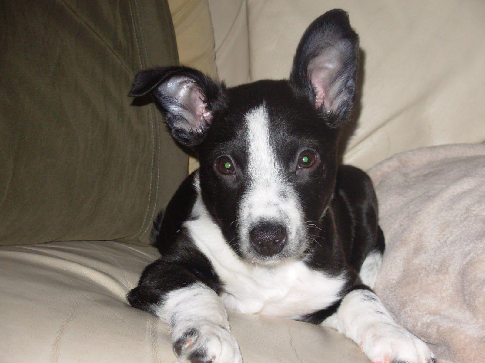 Pitbull Mix Dog Training Home Dog Types