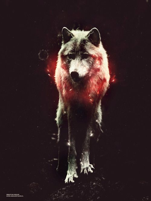 wolf, chaman, nagual, lobo