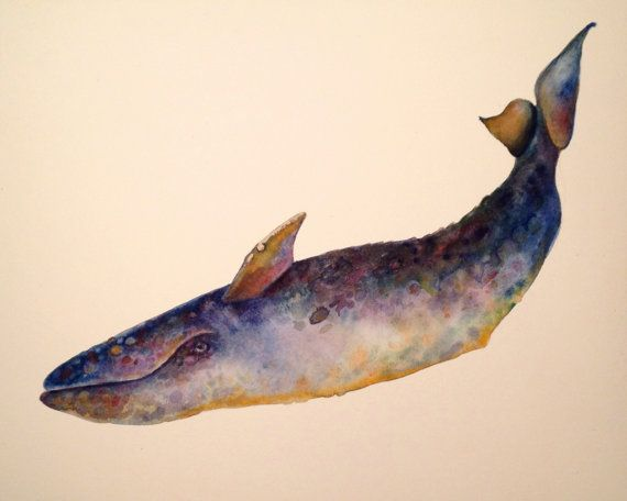 Gray Whale watercolor illustration  ©Michelle Scott, owner of dotsofpaint Studio in Northern California.  ALL RIGHTS RESERVED. dotsofpaint.com