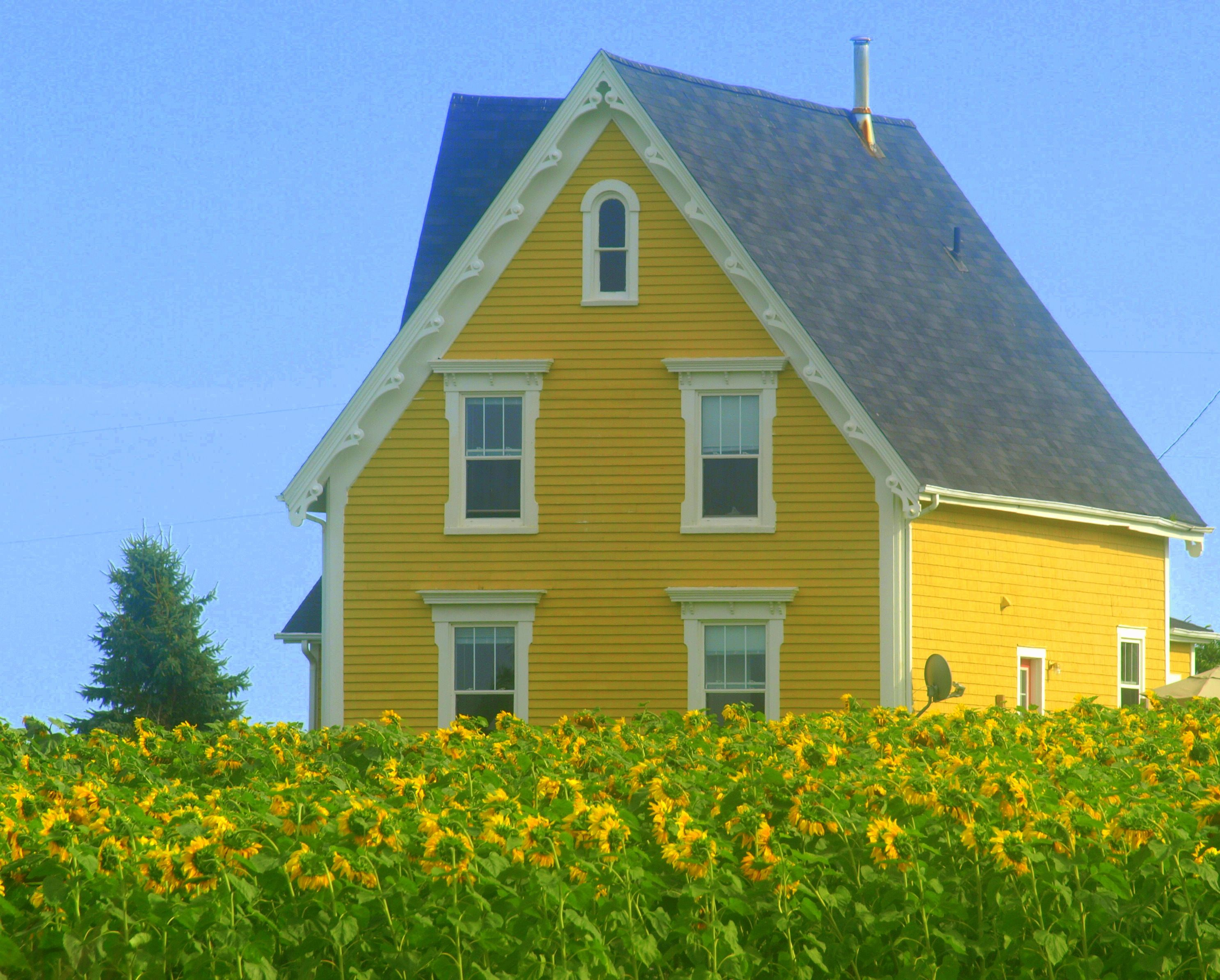 Yellow house in the sunflower fields pinteres for Blue house builders