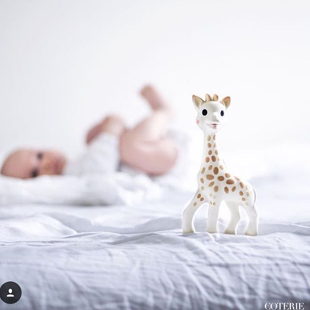 Heti kun vauvani alkoi tehdä hampaita, aloimme kuljettaa tätä kirahvilelua mukanamme joka paikkaan. Arvostan sitä, että purulelun materiaali on luonnollista, eikä muovia. Meidän tyttö tuntuu tykkäävän tästä, pureskelee aina kirahvin jalkoja :D - Elina, 2 tytön äiti Kuva: @coteriekids  #pikkuvanilja #purulelu #vauvalle #sophie #sophiethegiraffe #sophielagirafe #sophiekirahvi #babystuff #babyinspo #forbaby #baby #babygift #babyshower #lahjaidea #vauvalahja #lahja #vauva #bebis