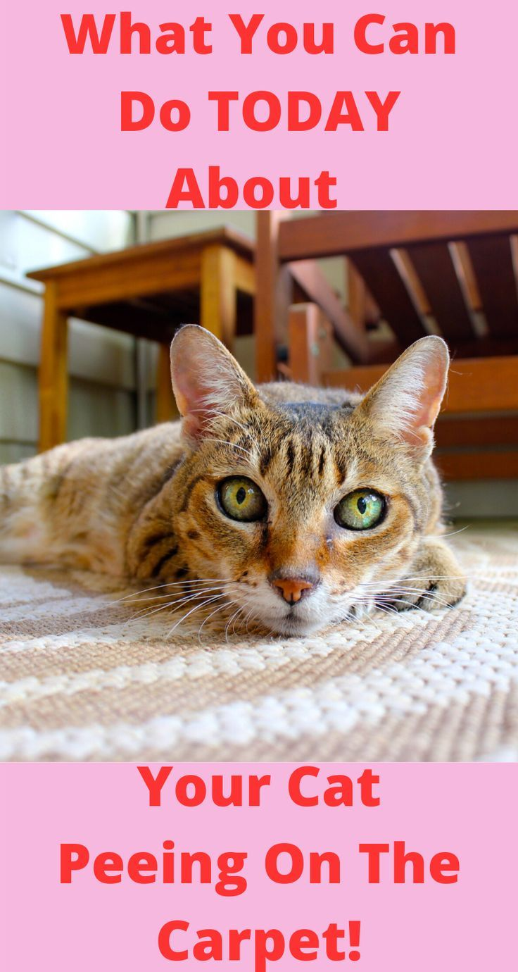 No More Cat Spraying Pint in 2020 Cats, Cat behavior