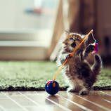 Cute Photographs of an Adorable Kitten