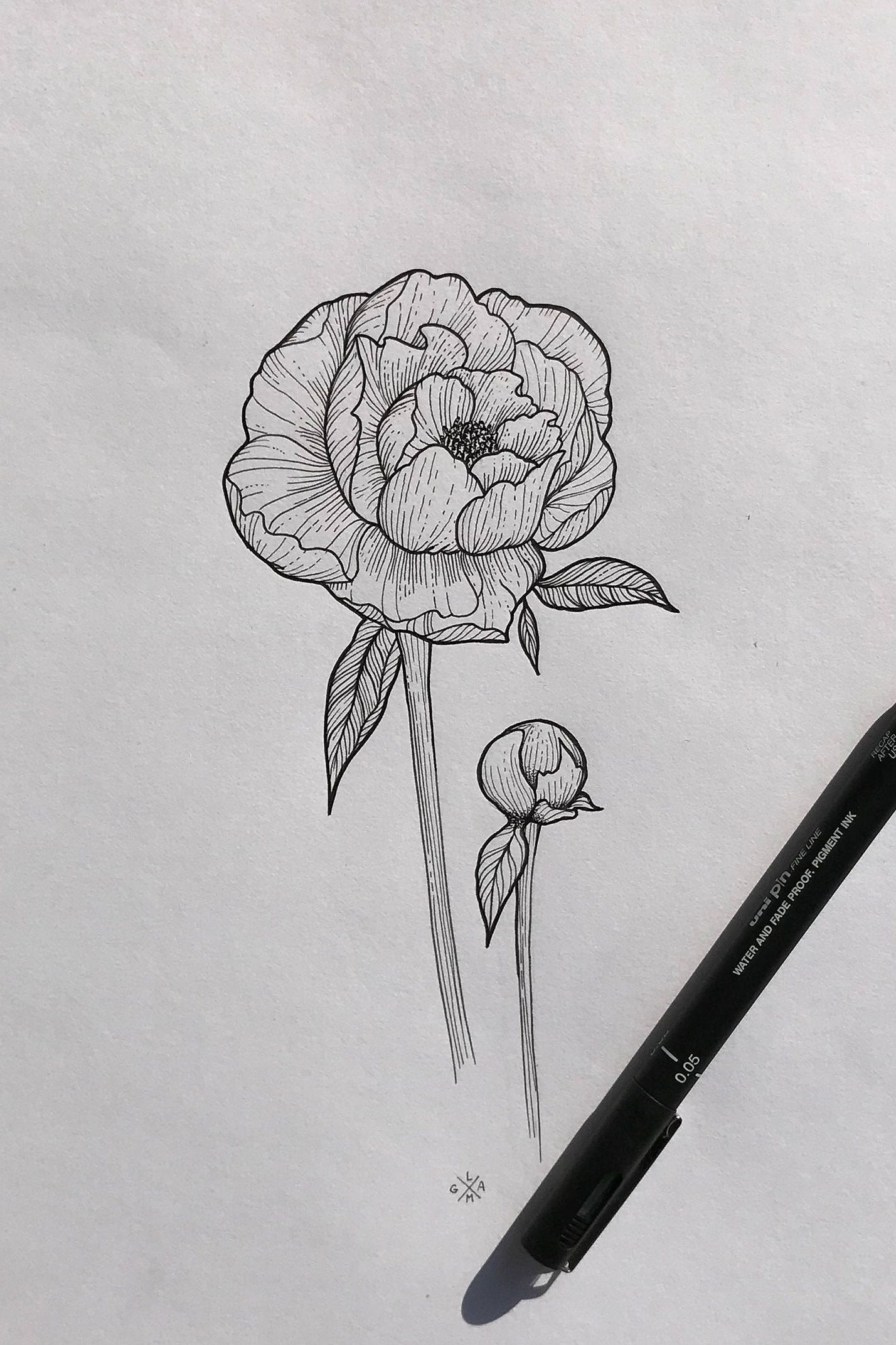 Peony drawing ink illustration Etsy Ink illustrations