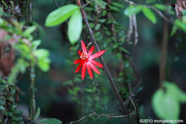 Rainforest Plants Plants Rainforest
