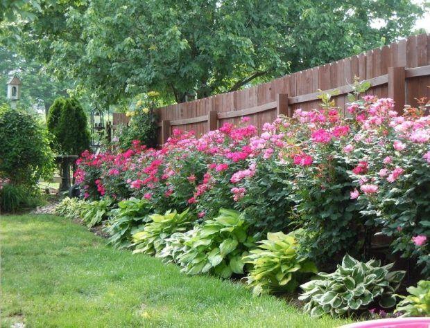 Immer Blühender Garten ideas for low annual plants to sidewalk in front of house