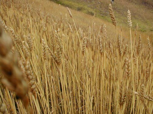 Agricultura Colonial En Chile Agricultura Chile Cocina Chilena